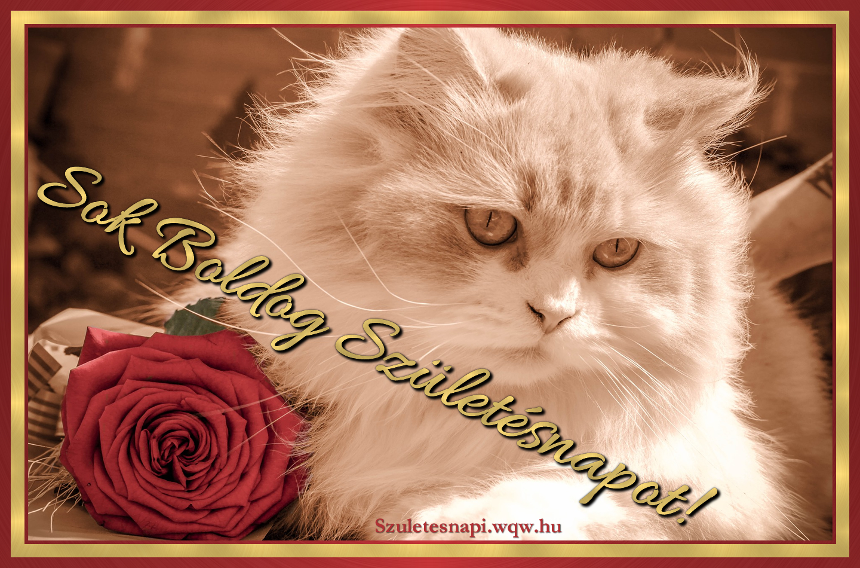 cicás szülinapi képeslapok Cica és rózsa, cicás szülinapi kép   Zenés születésnapi képeslapok  cicás szülinapi képeslapok