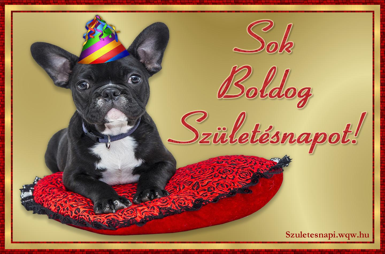 kutyás szülinapi képeslapok Francia bulldog, kutyás szülinapi kép   Zenés születésnapi  kutyás szülinapi képeslapok