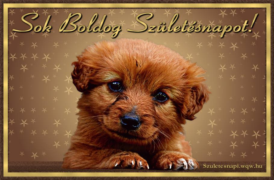 születésnapi állatos képeslapok Állatos születésnapi képek   Zenés születésnapi képeslapok és képek születésnapi állatos képeslapok