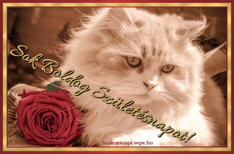 születésnapi macskás képek Állatos születésnapi képek   Zenés születésnapi képeslapok és képek születésnapi macskás képek