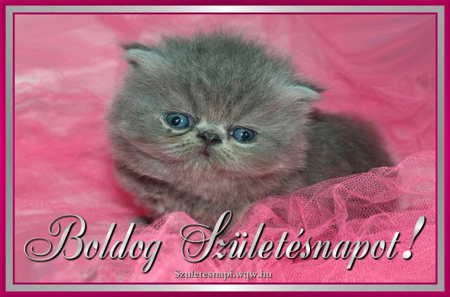 születésnapi képeslapok cicás Boldog Szülinapot Cicám — TakBuzz születésnapi képeslapok cicás