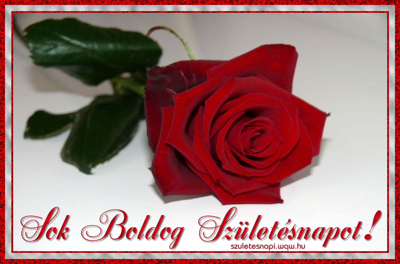 születésnapi rózsás képek Szülinapi képeslap nőknek, egy szál rózsa   Zenés születésnapi  születésnapi rózsás képek