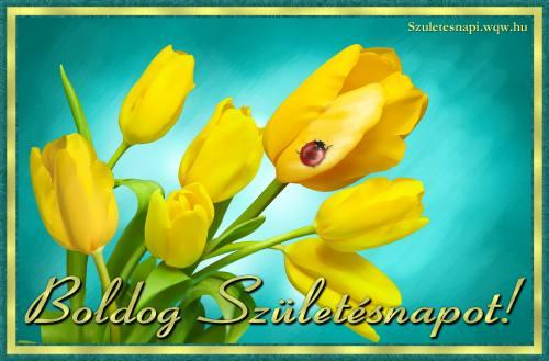 tulipános születésnapi képeslapok Tulipán születésnapi képek, 1 db kép   Zenés születésnapi  tulipános születésnapi képeslapok