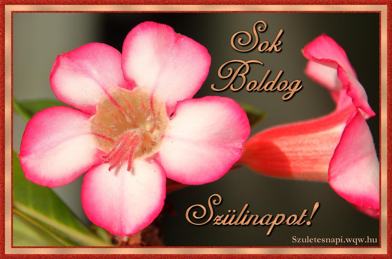 szülinapi képek nőknek Rózsaszín virág, szülinapi kép nőknek   Zenés születésnapi  szülinapi képek nőknek